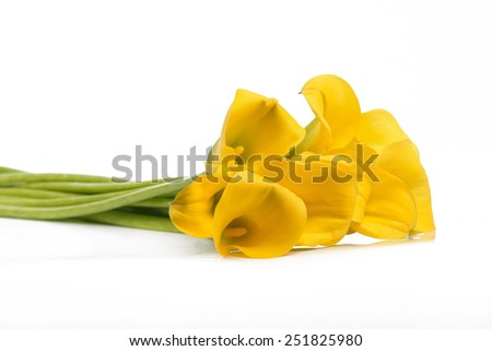 Isolated bunch of yellow Calla flowers on a white background - stock photo