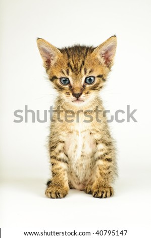 Isolated cat on white background.