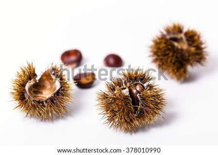 isolated chestnuts