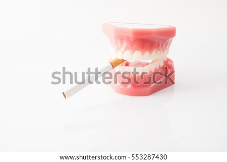 Isolated cigarette hold in dentist demonstration teeth model with white background