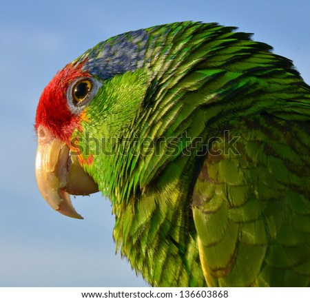 Isolated close up of an Amazon - stock photo