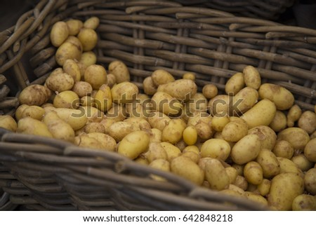 Isolated Close Up Top View of Fresh Organic Baby Potatoes in Basket, Local Farmers Market,  Background Backdrop Use with Text Copy Space Overlay (HDR Image) -  - Eugene, Oregon, USA