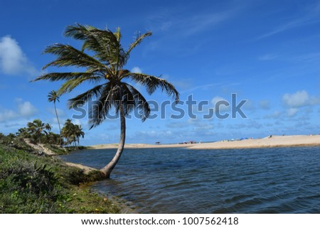 Isolated cocnunt tree by lake