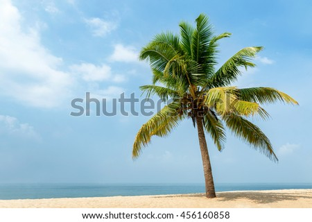 Isolated coconut palm tree on a beautiful exotic beach