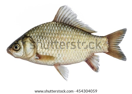 isolated crucian carp a kind of fish from the side live fish with flowing - Picture Of Fish