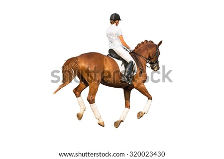 Isolated dressage rider on red stallion. White background.