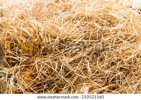 Isolated dry yellow hay.Close up view - stock photo