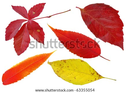 Isolated fallen autumn leafs on white background - stock photo