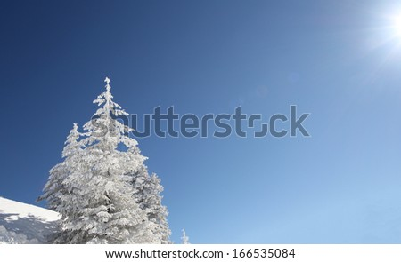Isolated fir trees full of snow under a deep blue sky during a winter sunny day - stock photo
