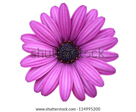 isolated flower - stock photo