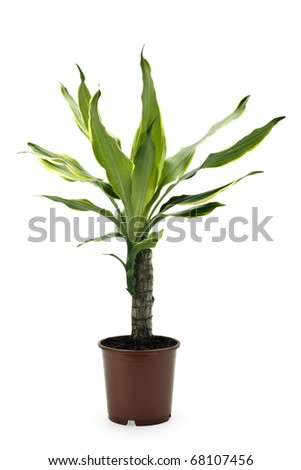 isolated flowerpot on a white background