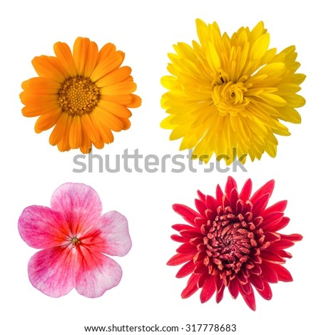 Isolated flowers set