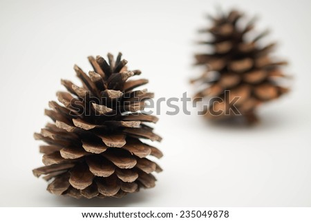 Isolated fresh and dried brown color pine cone for winter, holiday and Christmas symbol on white background - stock photo