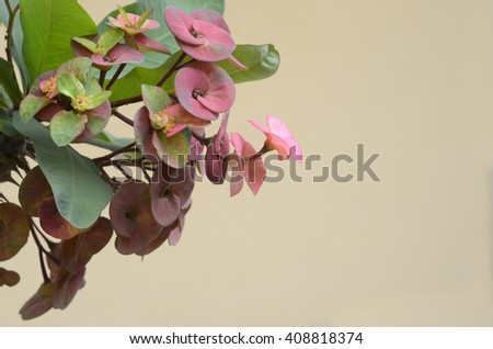 Isolated Fresh unknown flower  (soft focus ) - stock photo