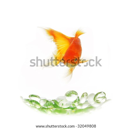 isolated gold fish over green glasses without bowl