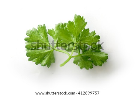 Isolated green branch of parsley on the white background