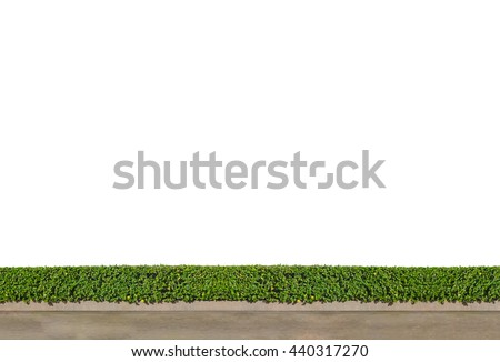 isolated Green Bushes fences with concrete floor on white background with clipping path at walk way - stock photo