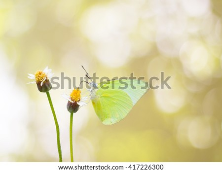isolated green butterfly and little flowers on golden bokeh background with clipping path