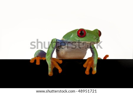 Isolated green frog peeping around placard - stock photo