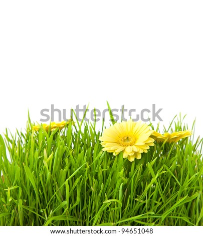 Isolated green grass with yellow flowers on a white background - stock photo