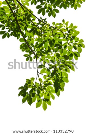 Isolated green leaf on white background with clipping path - stock photo
