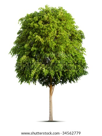 Isolated green tree on the white background - stock photo