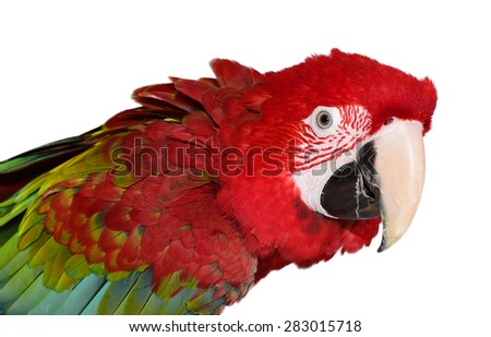 Isolated Green Wing Macaw - stock photo