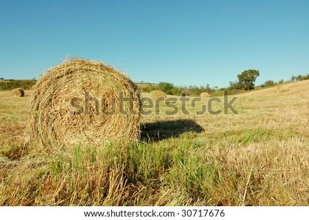 Isolated haystack - stock photo