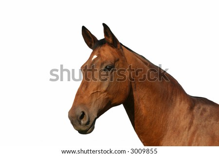 isolated horse portrait