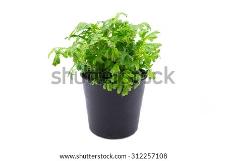 Isolated house plants on white background