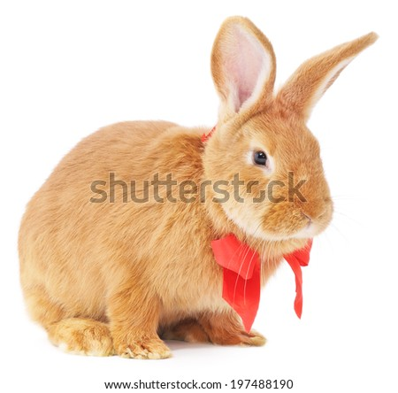 Isolated image of a brown bunny rabbit with bow.