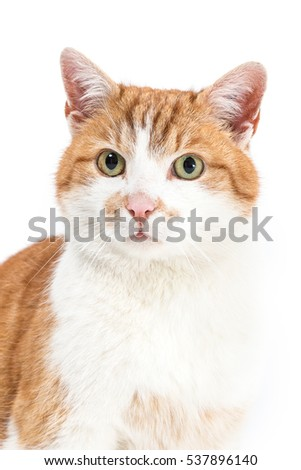 Isolated image of a male house cat