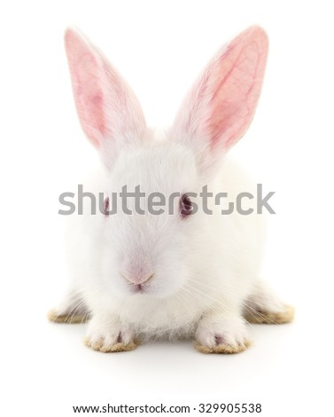 Isolated image of a white bunny rabbit. - stock photo
