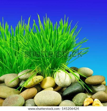Isolated image of grass and stones on a blue background - stock photo