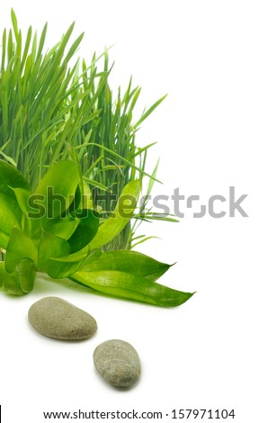 Isolated image of grass and stones on the white background - stock photo