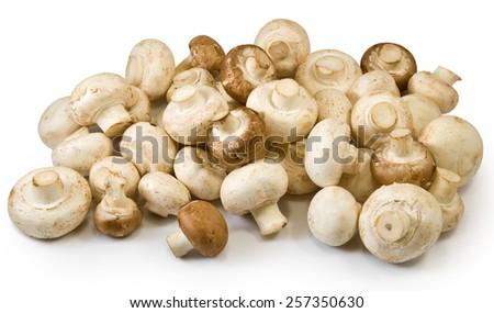 Isolated image of many mushrooms - stock photo