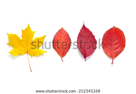 Isolated leafs. Autumn mood. - stock photo