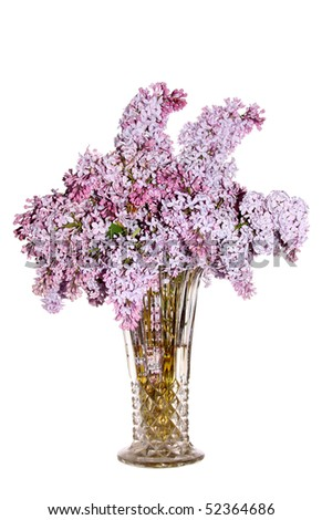 isolated lilac bouquet on white