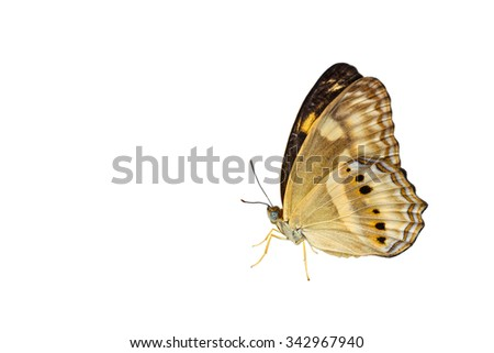 Isolated little banded yeoman butterfly on white with clipping path - stock photo