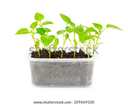 Isolated living plants growing in plastic container - stock photo