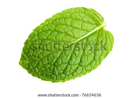 Isolated macro of fresh mint leaf - stock photo