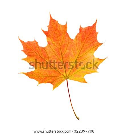Isolated Maple Leaf. Fall Symbol - stock photo