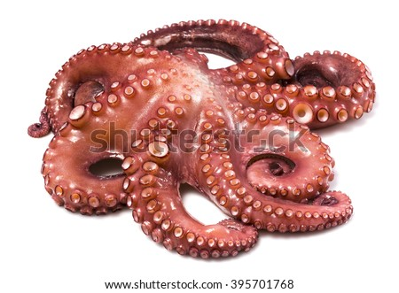 Isolated octopus - stock photo
