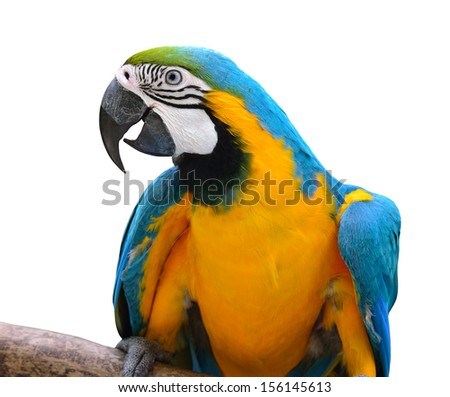 Isolated of Blue and Gold Macaw Aviary