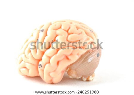 isolated of human brain - stock photo
