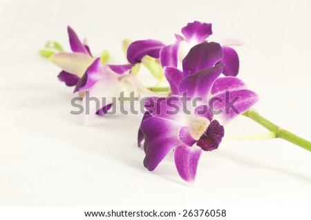 isolated orchid - stock photo