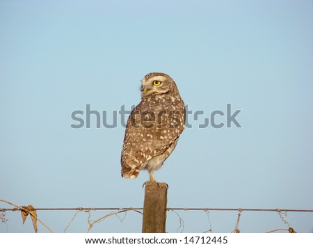 Isolated Owl staring at the side.
