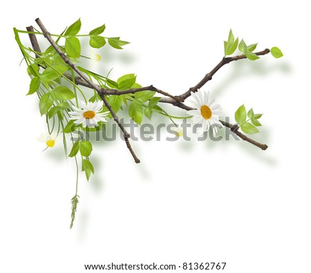 Isolated painted composition from branches and flowers