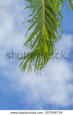 Isolated palm leaf with the point of focus on the center stalk and a blurry blue and white sky background. - stock photo