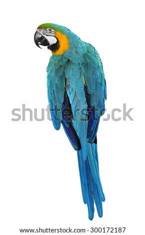 Isolated Parrot. Beautiful Parrot. Parrot Looking